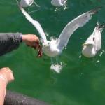 pêche à Cléder