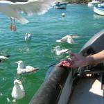 pêche (2)