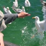 pêche (3)
